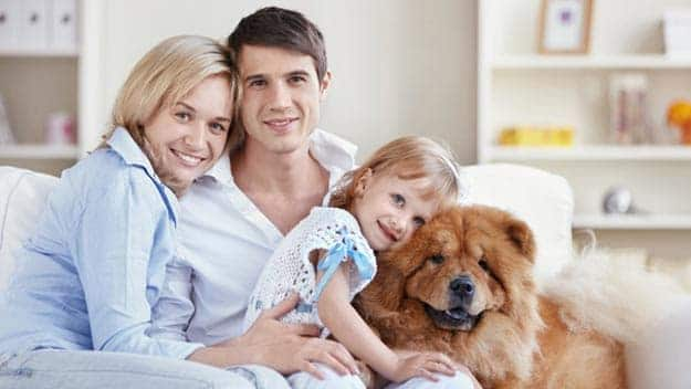 Wills & Trusts dog-young-family Direct Wills Spring Vale